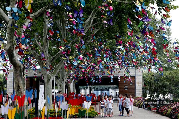 上海动物园第3届蝴蝶展9.25